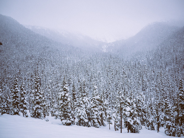 field of dreams. #canada #evergreens #snow #landscape #photography #mountains #trees #winter