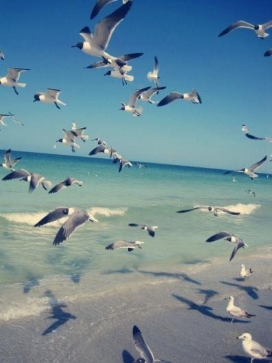 Sea gulls | Flickr - Photo Sharing! #ocean #photography #birds #nature