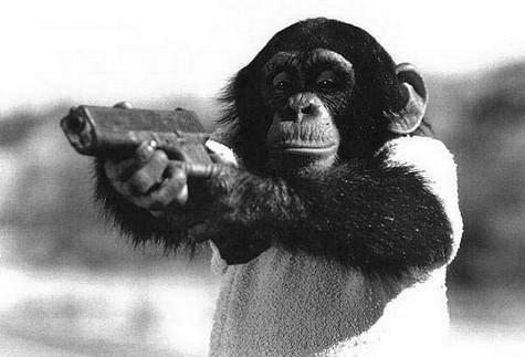 tumblr_lzdcv92KSx1qfm2v7o1_500 #gun #pistol #monkey #abe
