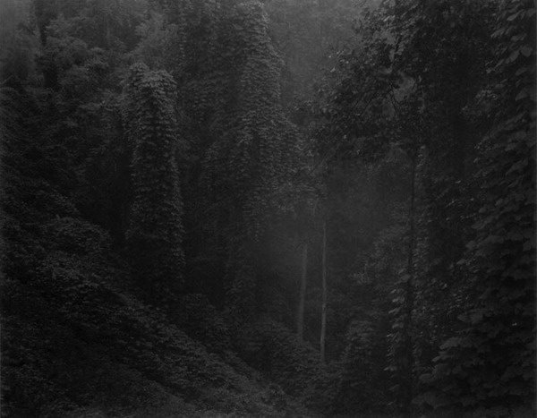 Sally Mann #white #black #photography #and #forest