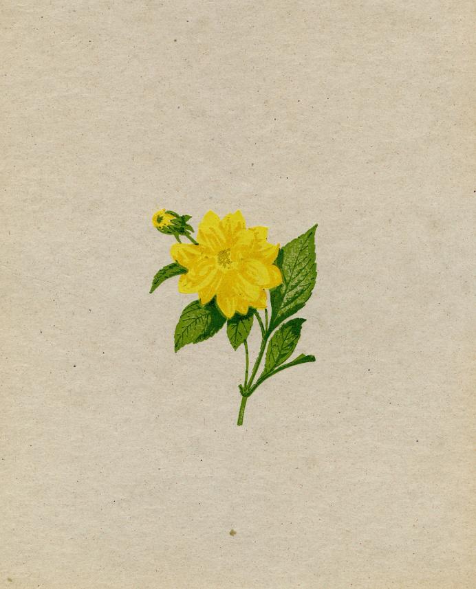 5-color letterpress print #Letterpress #Flower #Print