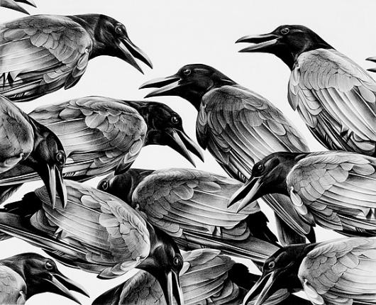 Christina Empedocles #birds
