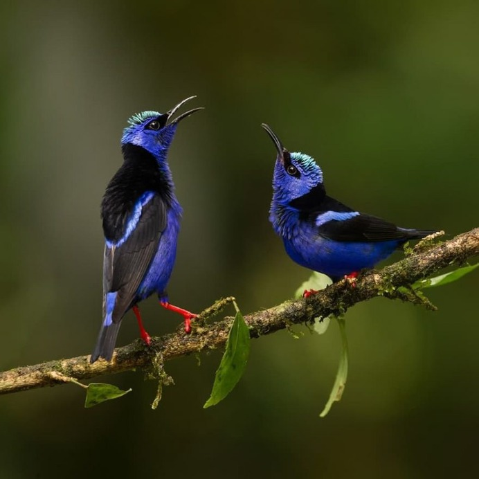 Amazingly Beautiful Birds Photography by Corey Hayes