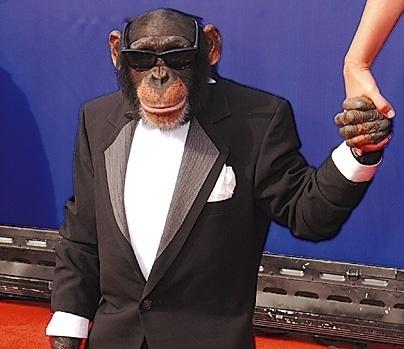 monkey_in_tuxedo_5i4g.jpg (404×349) #monkey #tuxedo