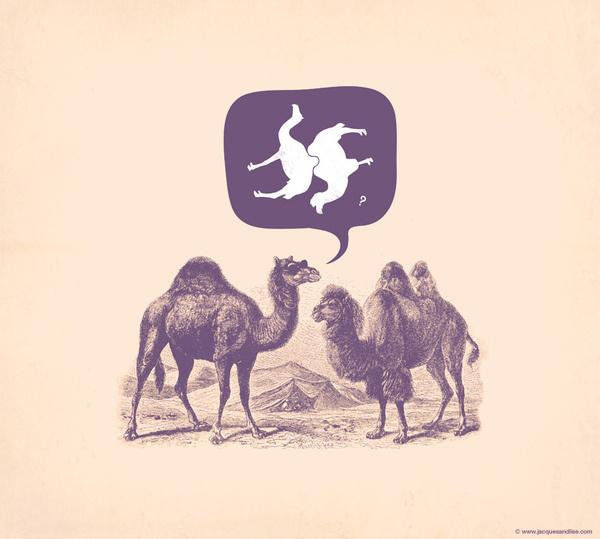 Jacques Maes – Graphic Design #camel