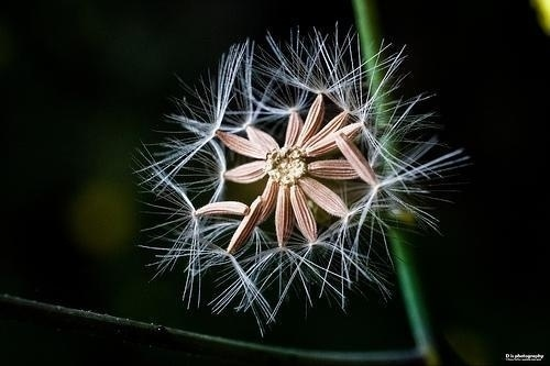 Photography by Chang Tao-Tzu | Professional Photography Blog #inspiration #photography