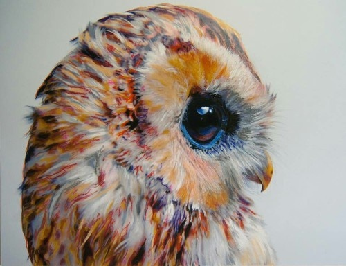 Pretty owl by Natasha