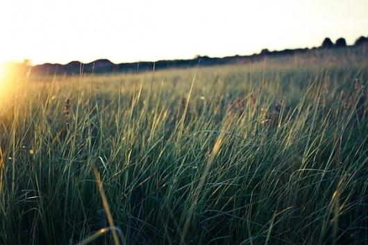 Just a moment away on the Behance Network #serene #sun #field #tranquil #light #mountains #green