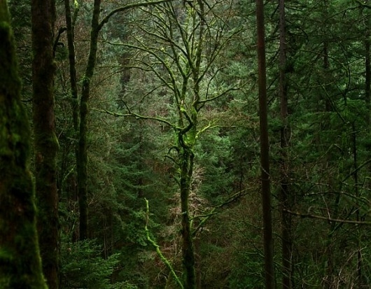 Into the forest by Zeb Andrews » Creative Photography Blog #inspiration #photography #nature