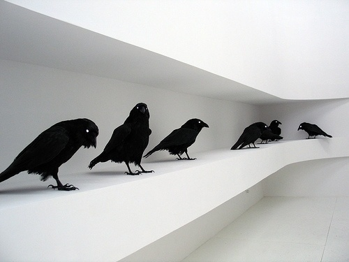 tumblr_l5b8oa5RiR1qzs56do1_500.jpg (500×375) #crows