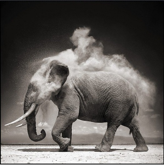 Black and White Animal Photography by Nick Brandt » Creative Photography Blog #white #black #photography #and #animal