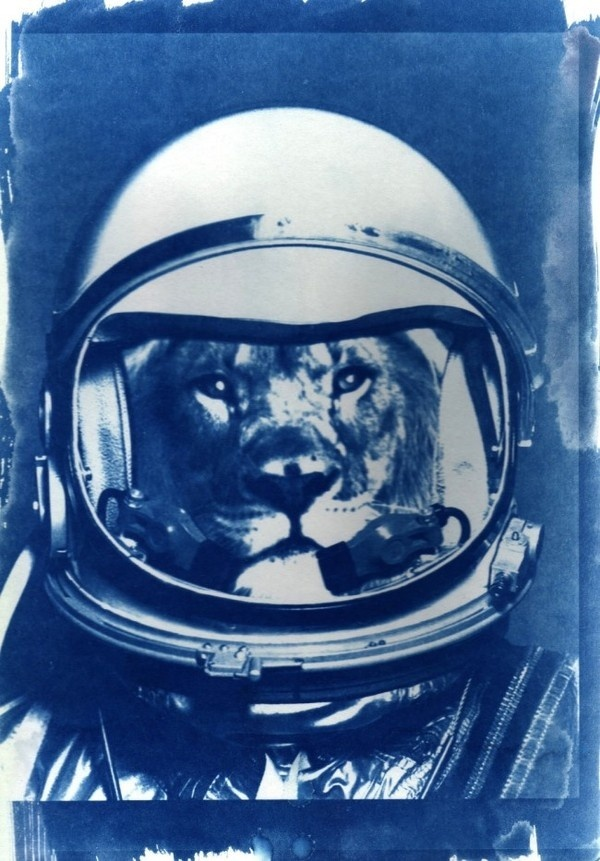 WE ARE ALL ANIMALS by Sylvain Cotte #astronaut #lion #animal #space