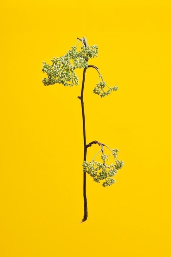 RAW COLOR #blossom