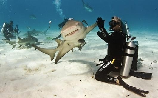 Smiling Shark Gives High-Five! - My Modern Metropolis #epic #underwater #shark #smile #high five #swim #smiling