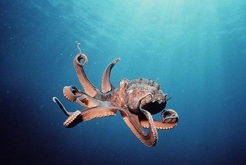 FFFFOUND! #octopus