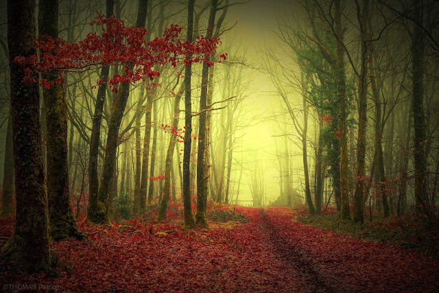 Mystical and Beautiful Forest Photography by Patrice Thomas