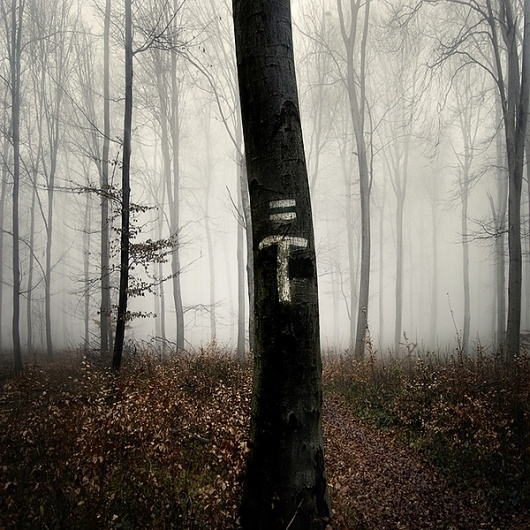 a forest on the Behance Network #trees