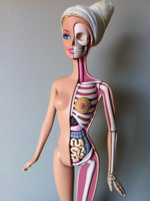 Barbie Gets Dissected, Reveals Her Anatomy DesignTAXI.com #model #jason #anatomy #freeny #barbie
