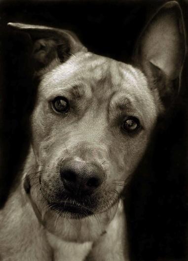 tumblr_lyvzreP2WM1qcjadfo1_1280.jpg (600×833) #shelter #me #portait #sad #animal #adopt #dog