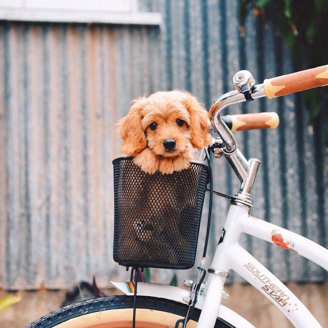 On a bike.. What adventures will we get up too next.. ☺️ #animal #photography #puppy