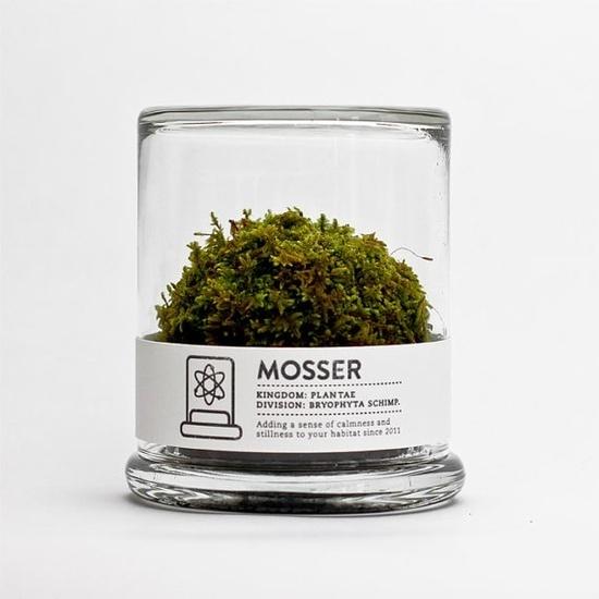 scientific glass moss terrarium #packaging #botanical #terrarium #label