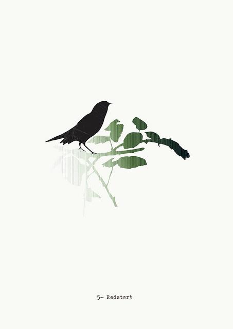 Museum animals #b&w #birds #illustration #drawn #hand