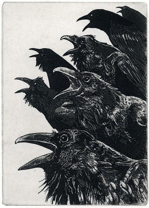 The Ravens #white #black #murder #illustration #birds #and #crows #ravens
