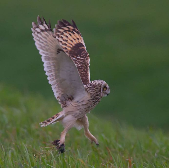 #only_raptors: Beautiful Birds of Prey Photography by Luciano Piazza