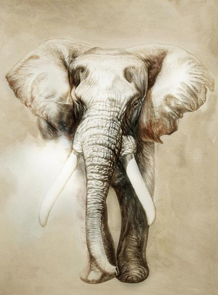 Elephant Art Print #tusks #africa #drawing #elephant #large #illustration #animal