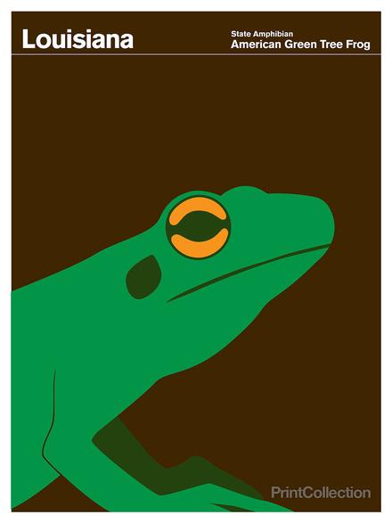 Louisiana #amphibian #brown #frog #green