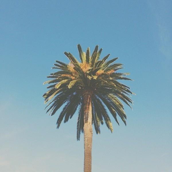 00ca3eb28b5b11e3b79f124cf866f5f4_8.jpg (640×640) #palm #california #tree #sky