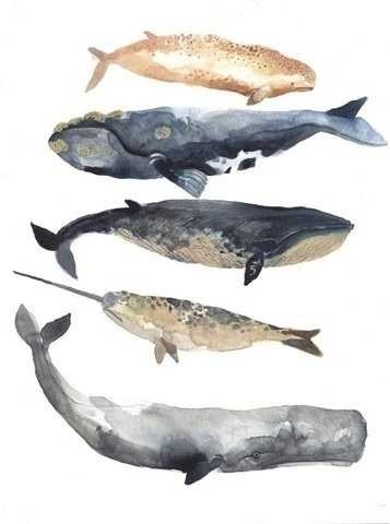 Whales watercolor #illustration #watercolor #whales