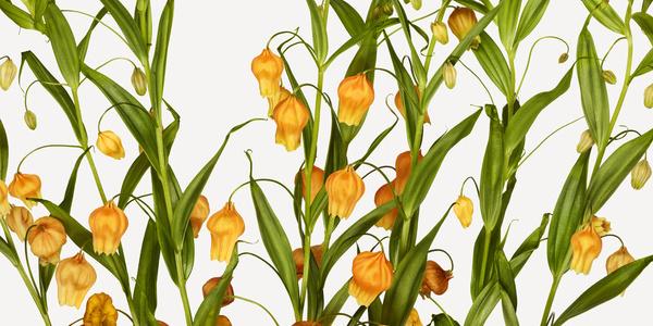Flowers | The Flower Book #flower