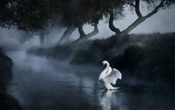 Alex Saberi #inspiration #photography #nature