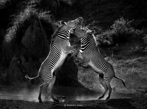 Wildlife photography by marina cano creative photography blog inspiration wildlife photography