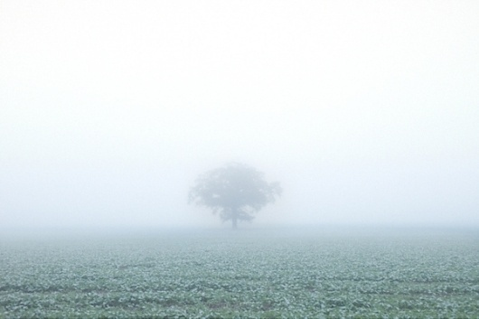 MIST on Photography Served #field #fog #tree