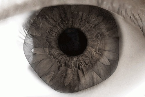 Complex Moves #eye #gif #iris