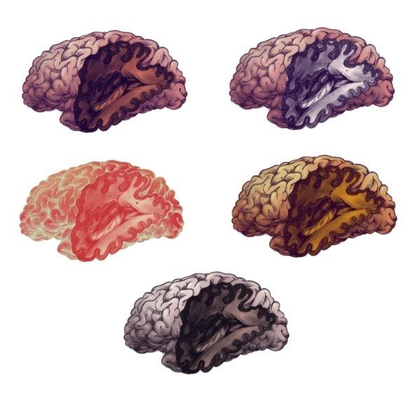 { teaganwhite } design & illustration #design #slice #anatomy #brain #human #smart #illustration #organ #repetition #intelligence