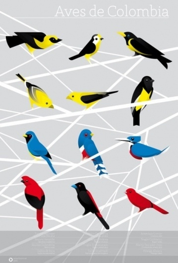 I love monday #birds #illustration #poster #colombia