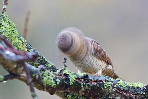 Falcon. #branch #blur #head #bird #photography #falcon #shake
