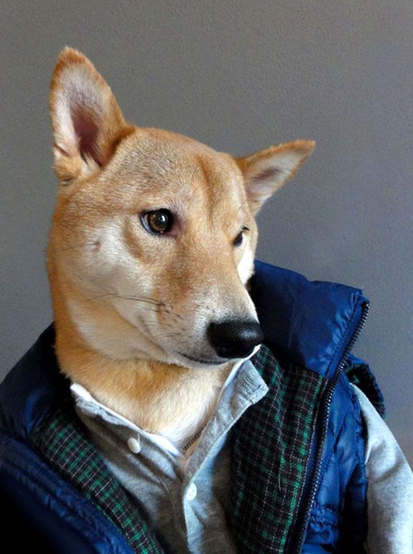 Fashion dog #pose #inu #shiba #fashion #dog