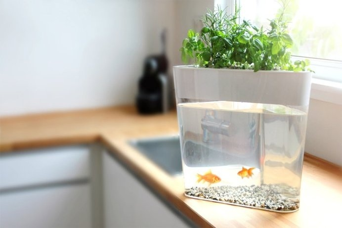 Grow fresh, organic produce in your own home with Ecofarm, a self-cleaning mini-loop ecosystem and fish tank. #modern #self #lifestyle #design #fish #tank #home #product #cleaning #industrial #style