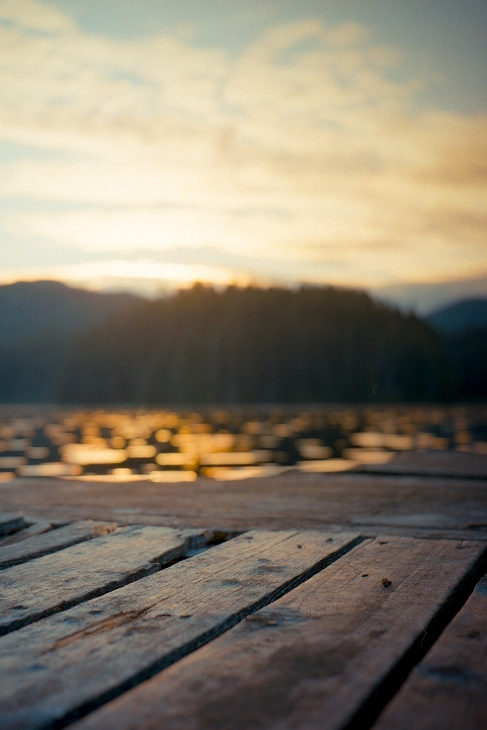 peace #forest #serene #ground #water #sky #deck #pier #planks #wood #trees #sunlight #lake #peace #view #peaceful