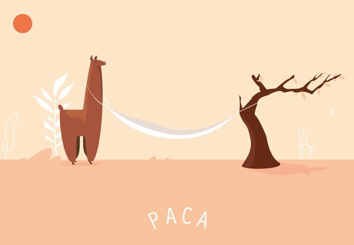 paca-case5