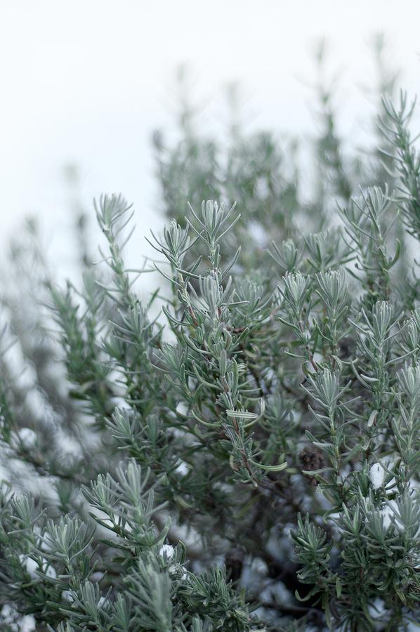 Herbs&Eggs #brunch #breakfast #fresh #snow #rosemary #herbs #winter