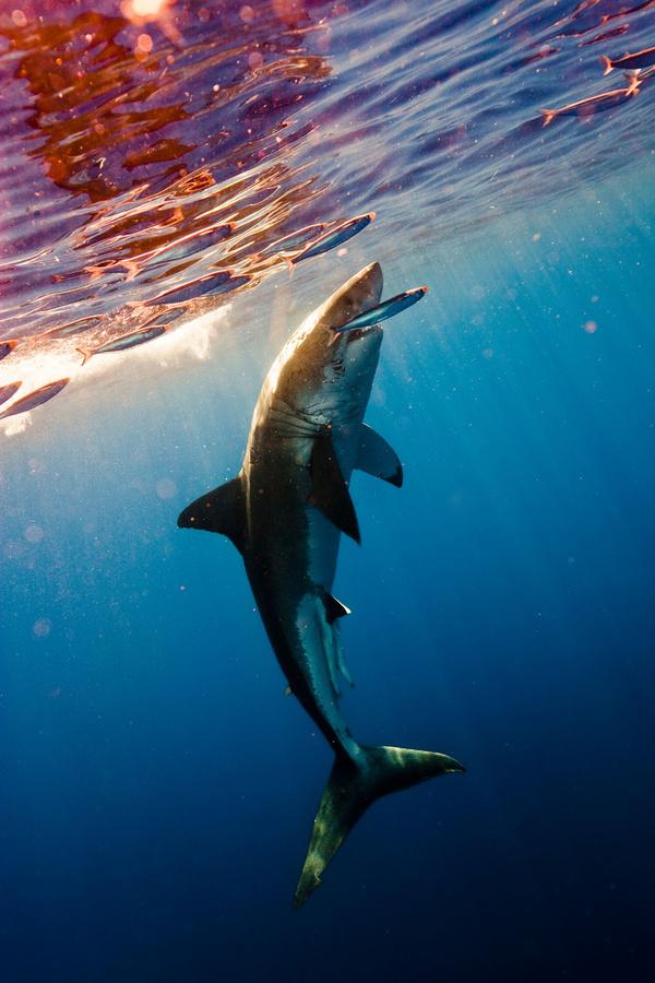 Shark Hunt by Michael Muller | Iconology #muller