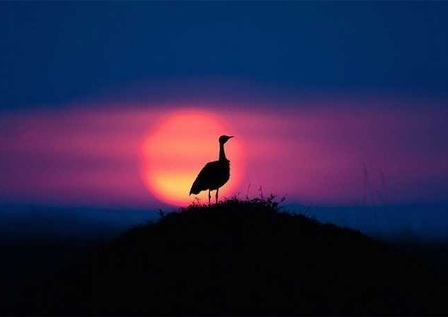 Sunsets in Kenya by Paul Goldstein #inspiration #photography #landscape