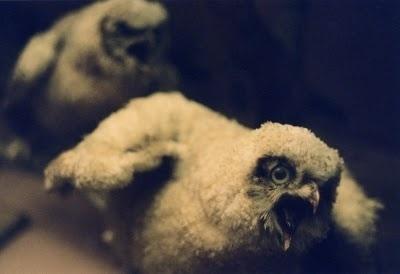 The Collective Loop: Debbie Carlos Human Nature Collection #birds #photography #debbie #carlos