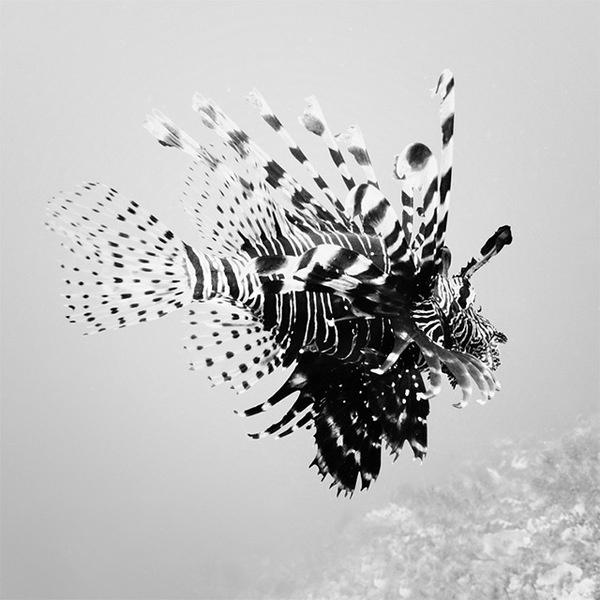 Black and White Underwater Photography by Hengki Koentjoro #photography