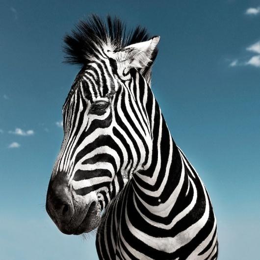 Noble Animals - My Modern Metropolis #photography #animals